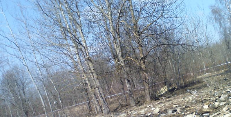 Fragment zdjęcia, na którym widać ciała ofiar katastrofy smolańskiej